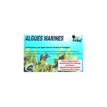 Poudre d'algues Bretonne